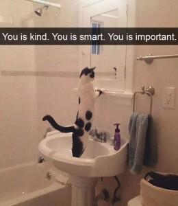 cat mirror